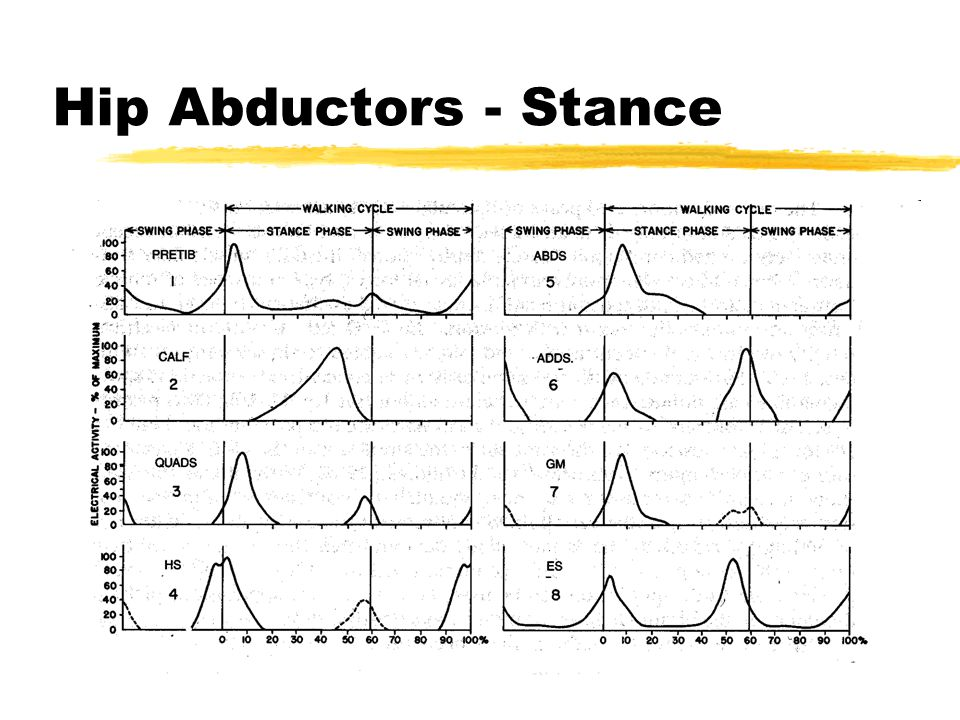 Hip Abductors - Stance