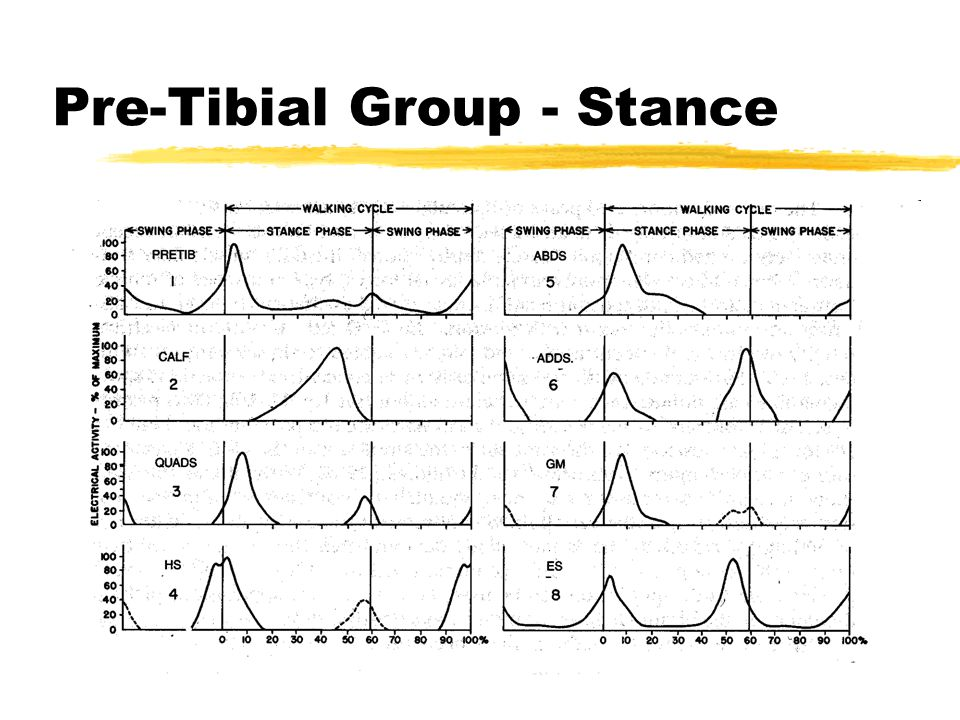 Pre-Tibial Group - Stance