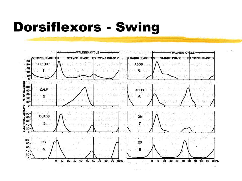 Dorsiflexors - Swing