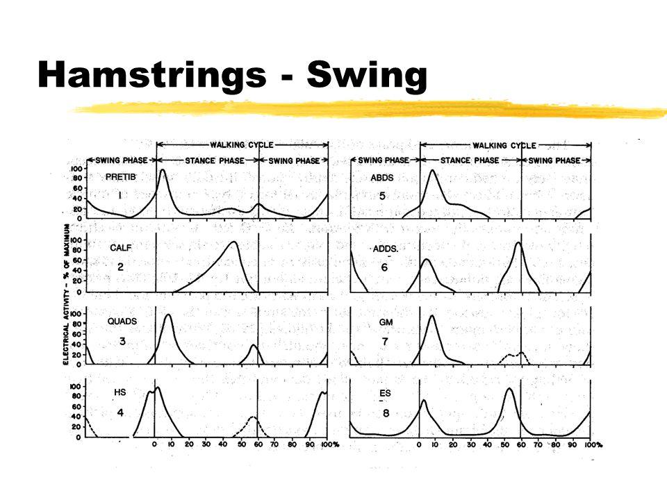 Hamstrings - Swing