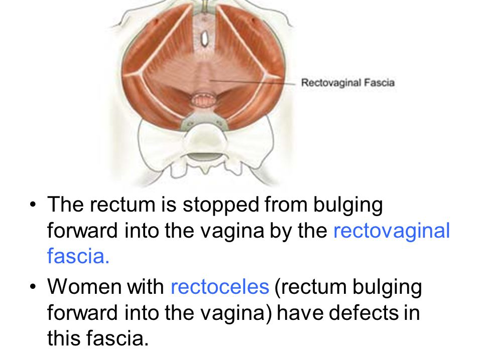 The rectum is stopped from bulging forward into the vagina by the rectovaginal fascia.