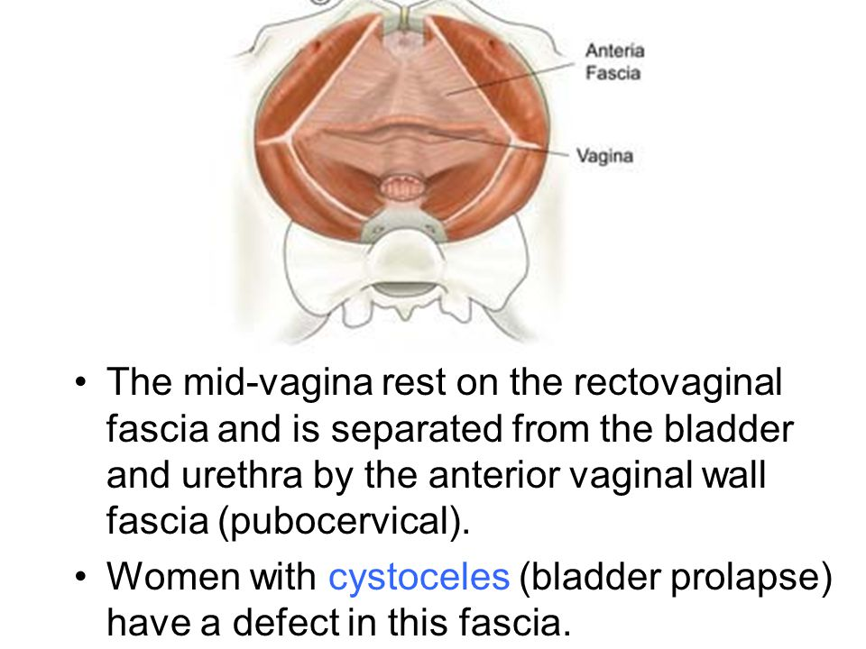 The mid-vagina rest on the rectovaginal fascia and is separated from the bladder and urethra by the anterior vaginal wall fascia (pubocervical).