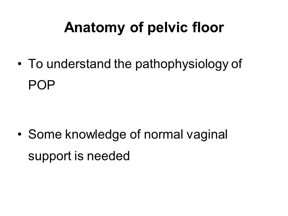 Anatomy of pelvic floor