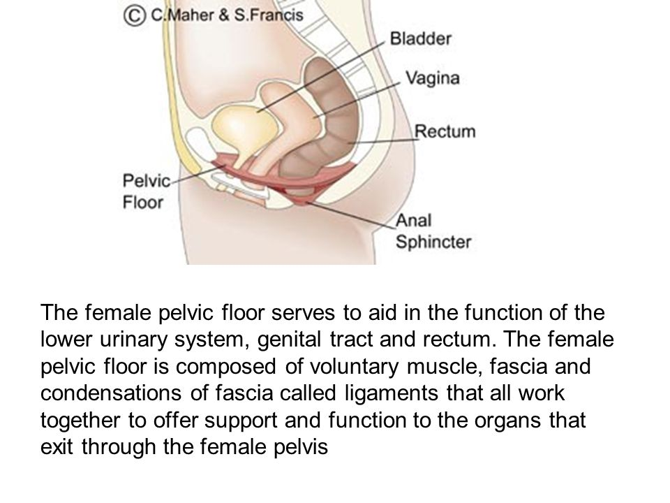 The female pelvic floor serves to aid in the function of the lower urinary system, genital tract and rectum.