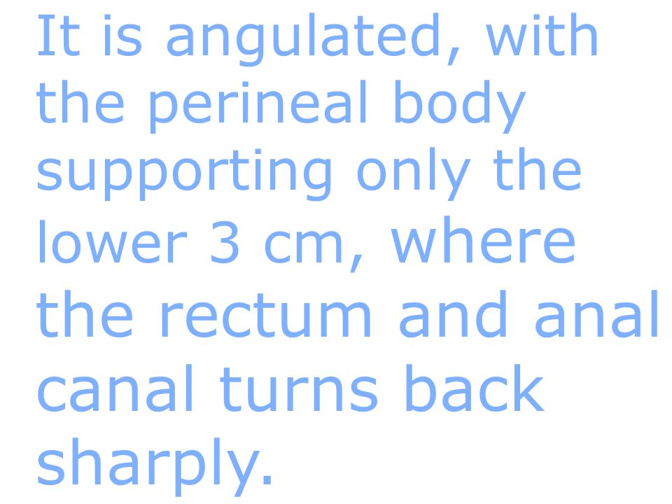 It is angulated, with the perineal body supporting only the lower 3 cm, where the rectum and anal canal turns back sharply.