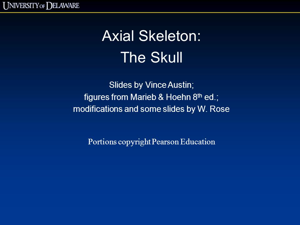 Axial Skeleton: The Skull Slides by Vince Austin;
