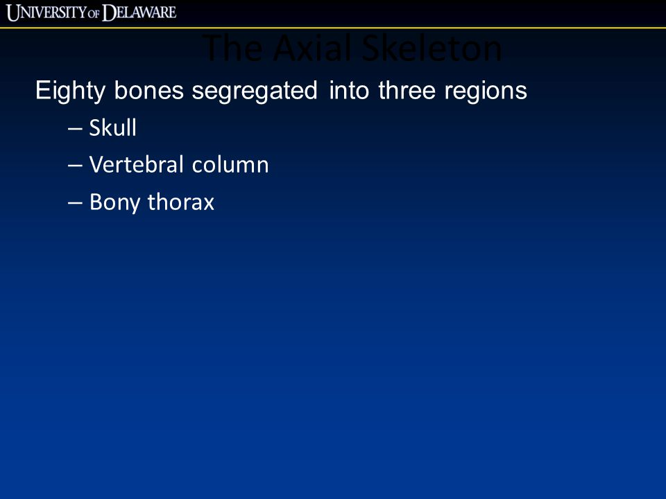The Axial Skeleton Eighty bones segregated into three regions Skull