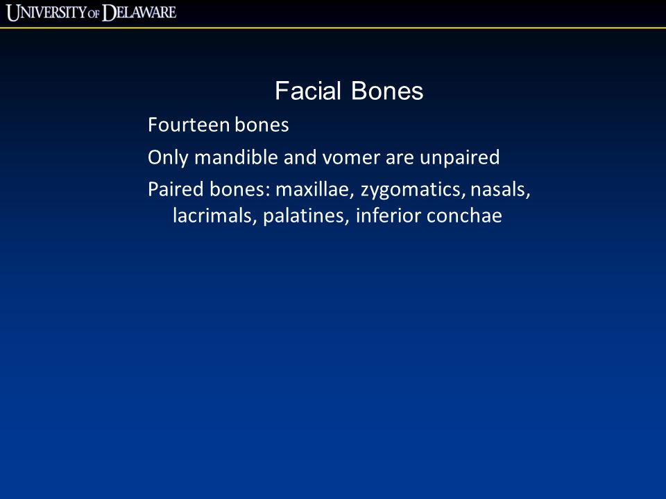 Facial Bones Fourteen bones Only mandible and vomer are unpaired