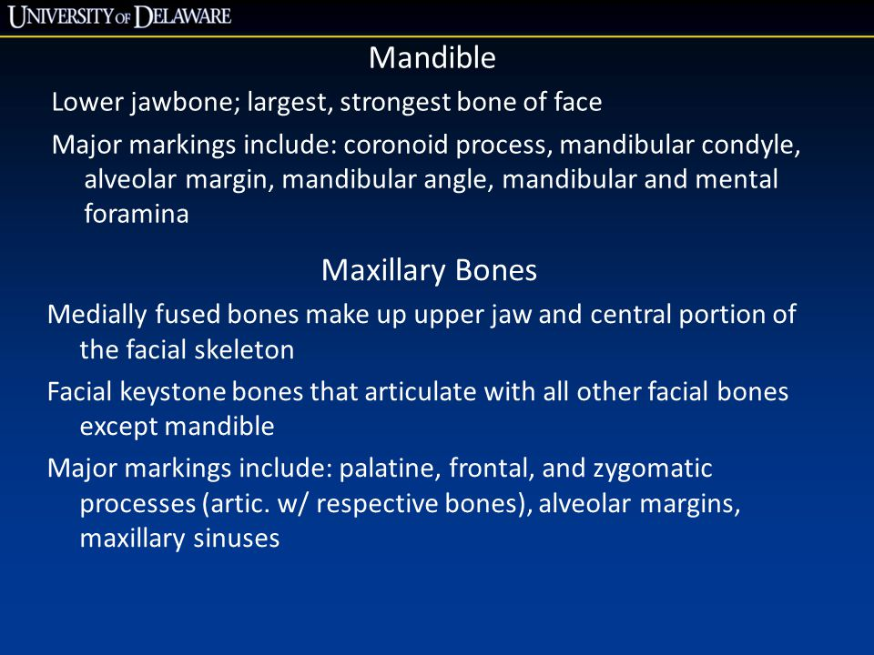 Mandible Maxillary Bones