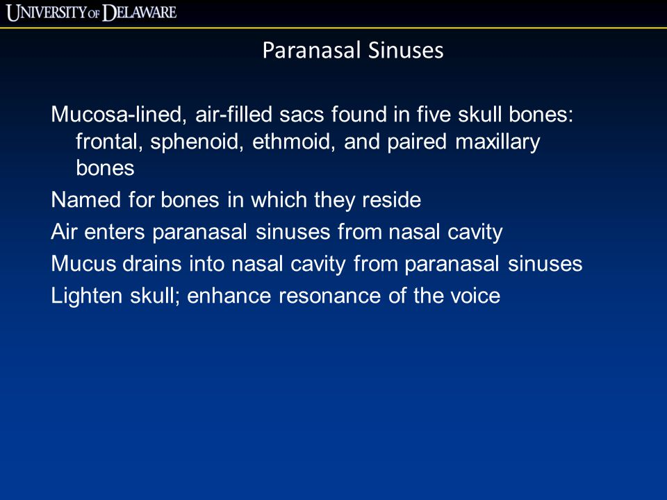 Paranasal Sinuses Mucosa-lined, air-filled sacs found in five skull bones: frontal, sphenoid, ethmoid, and paired maxillary bones.