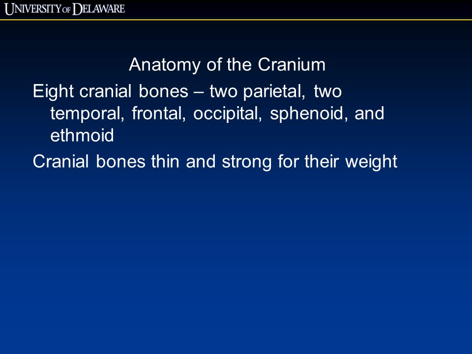 Anatomy of the Cranium Eight cranial bones – two parietal, two temporal, frontal, occipital, sphenoid, and ethmoid.