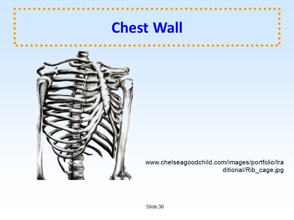 Chest Wall