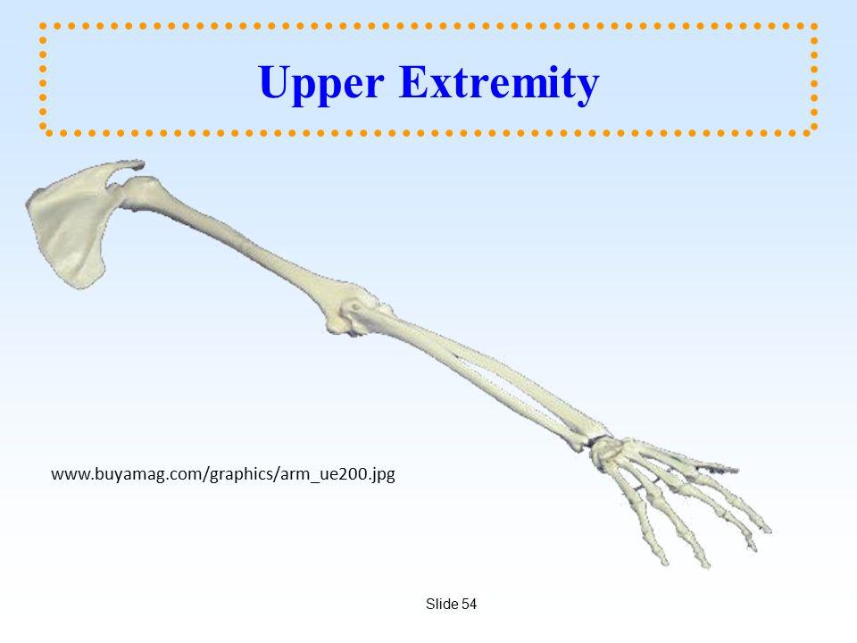 Upper Extremity www.buyamag.com/graphics/arm_ue200.jpg