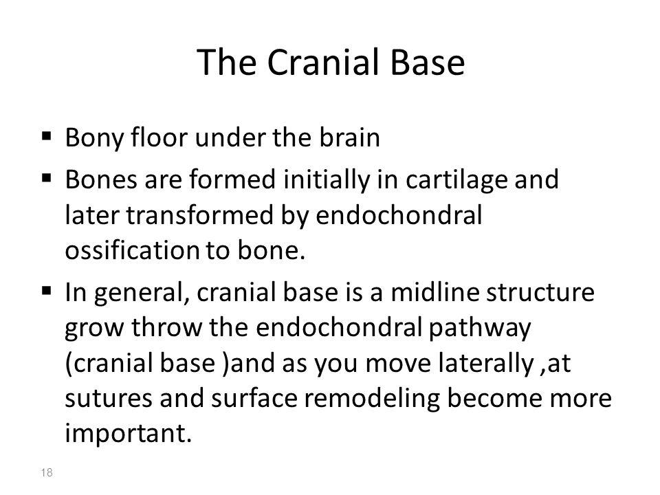 The Cranial Base Bony floor under the brain