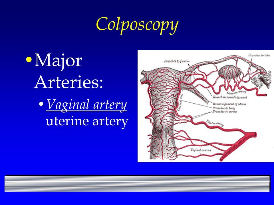 Colposcopy Major Arteries: Vaginal artery uterine artery