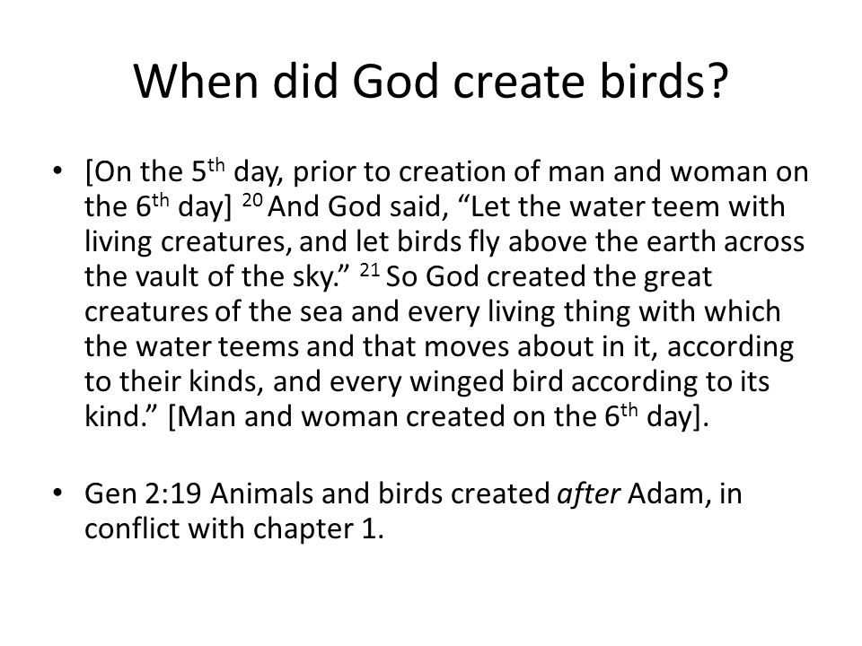 When did God create birds