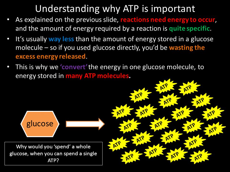 Understanding why ATP is important