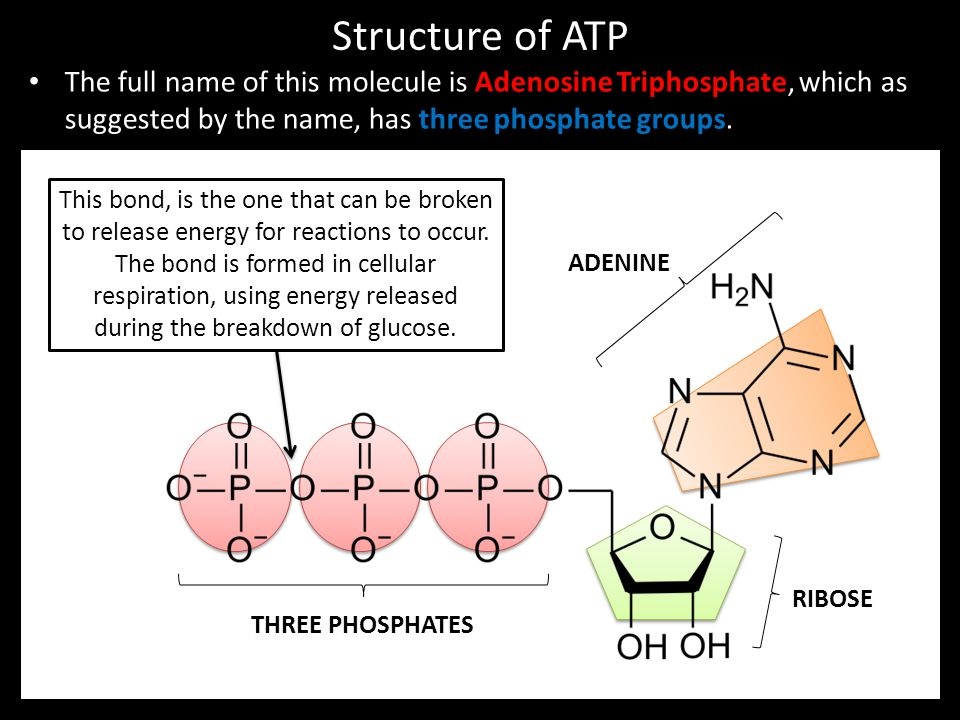 Structure of ATP The full name of this molecule is Adenosine Triphosphate, which as suggested by the name, has three phosphate groups.