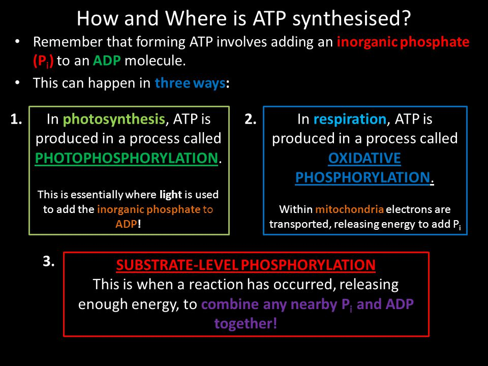 How and Where is ATP synthesised