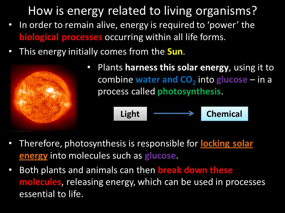 How is energy related to living organisms