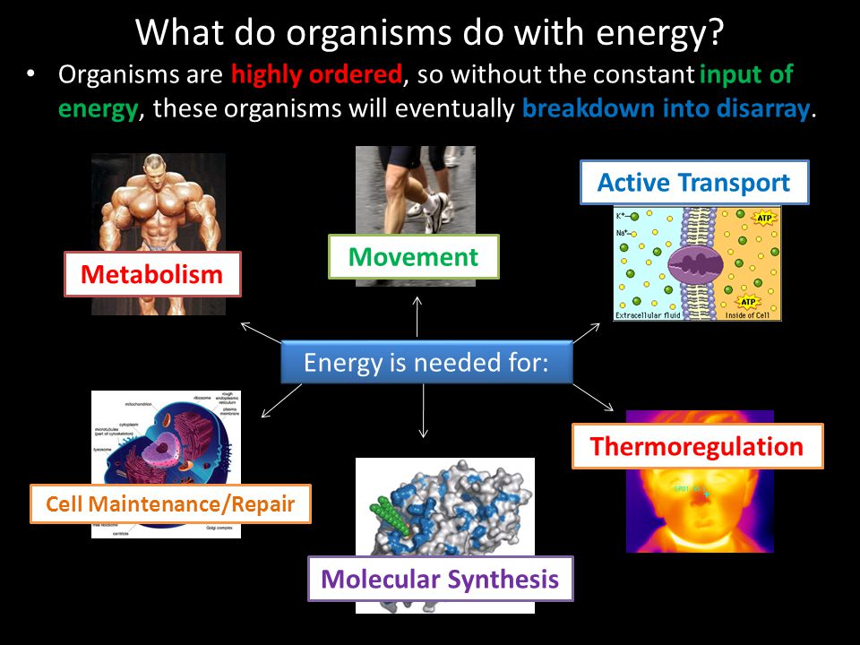 What do organisms do with energy