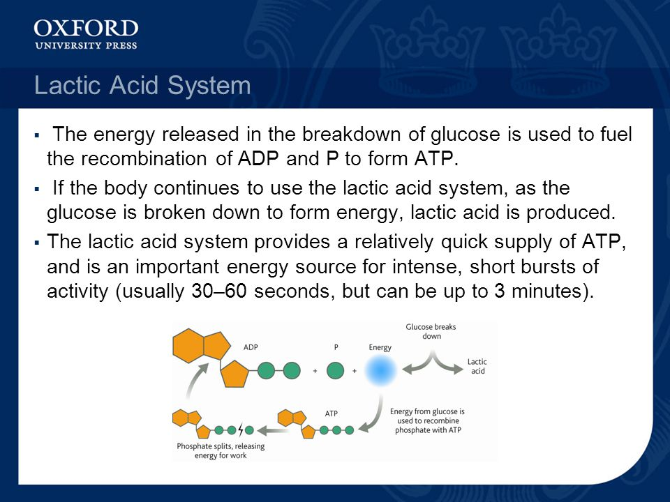 Lactic Acid System The energy released in the breakdown of glucose is used to fuel the recombination of ADP and P to form ATP.