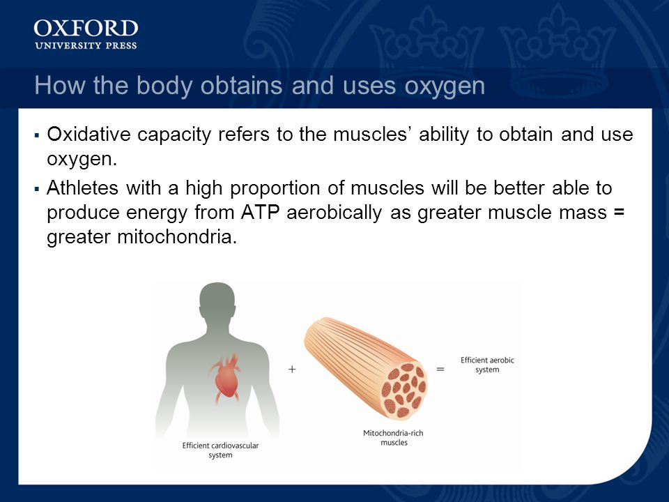 How the body obtains and uses oxygen