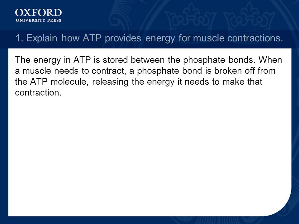 1. Explain how ATP provides energy for muscle contractions.