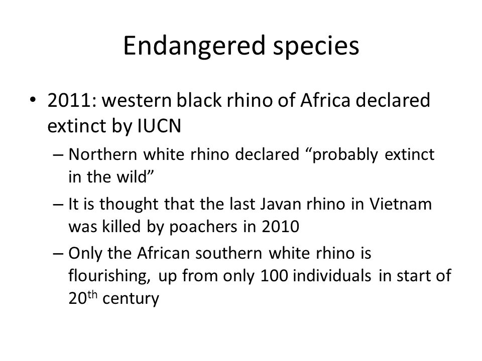 Endangered species 2011: western black rhino of Africa declared extinct by IUCN. Northern white rhino declared probably extinct in the wild