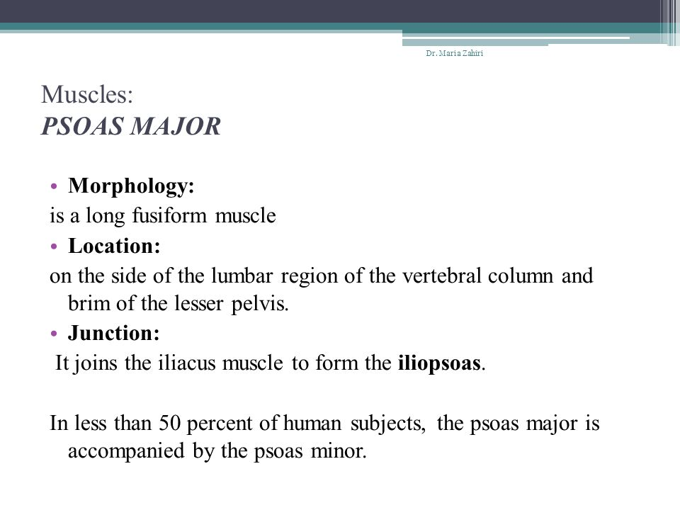 Muscles: PSOAS MAJOR Morphology: is a long fusiform muscle Location:
