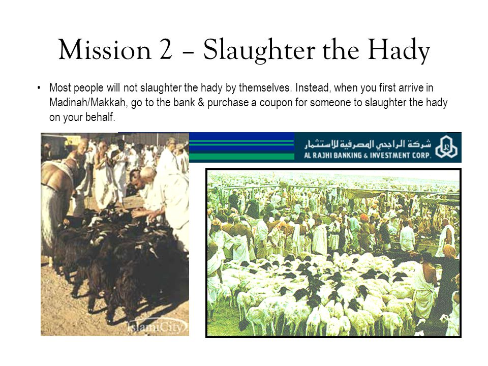 Mission 2 – Slaughter the Hady