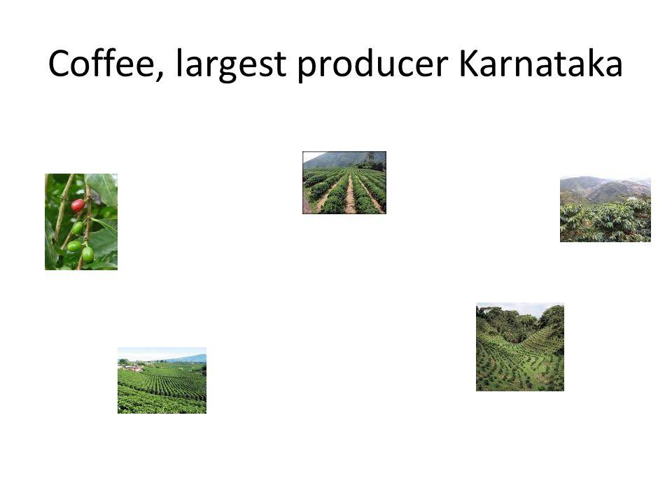 Coffee, largest producer Karnataka