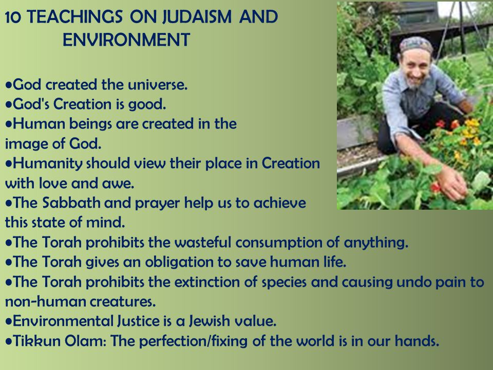 10 TEACHINGS ON JUDAISM AND ENVIRONMENT