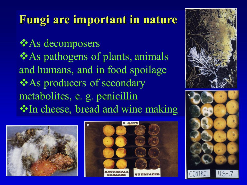 Fungi are important in nature