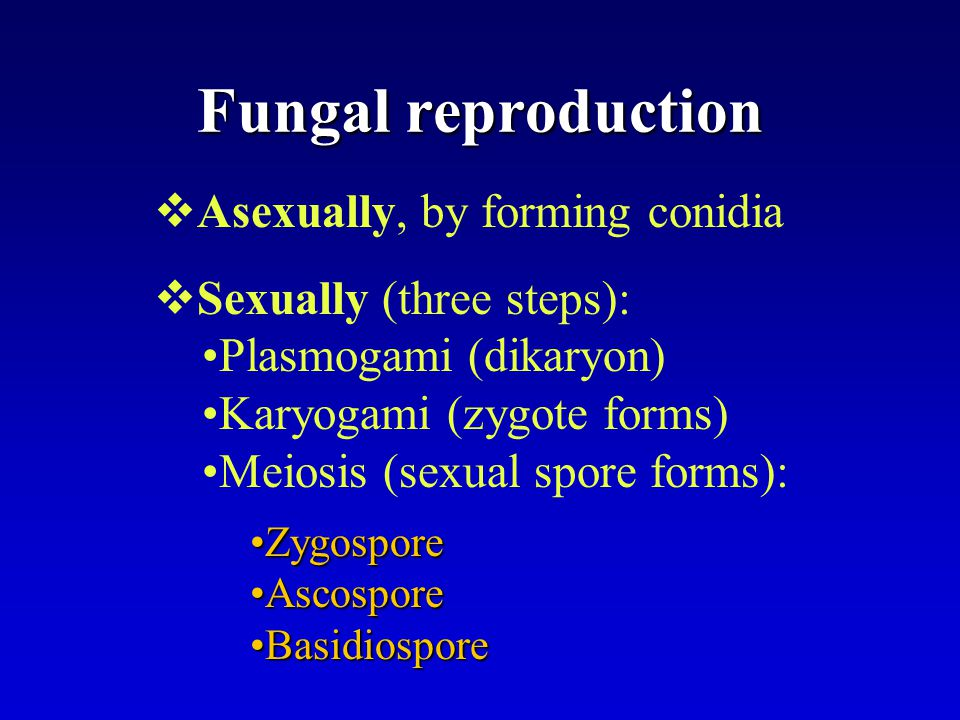 Fungal reproduction Asexually, by forming conidia