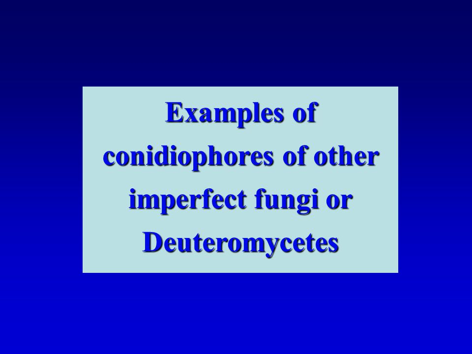 Examples of conidiophores of other imperfect fungi or Deuteromycetes