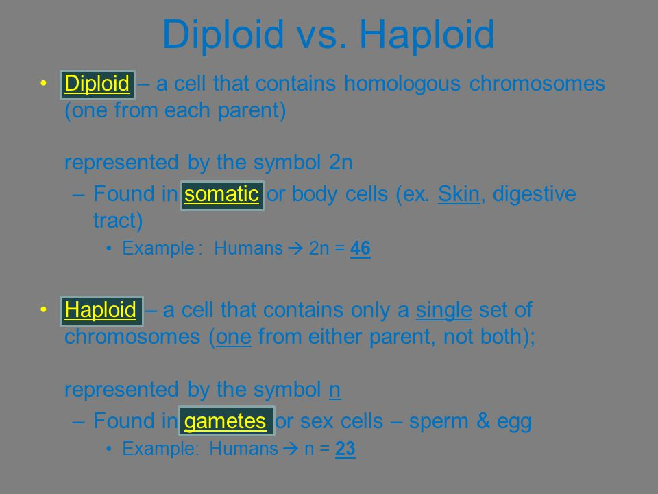 Diploid vs. Haploid Diploid – a cell that contains homologous chromosomes (one from each parent) represented by the symbol 2n.