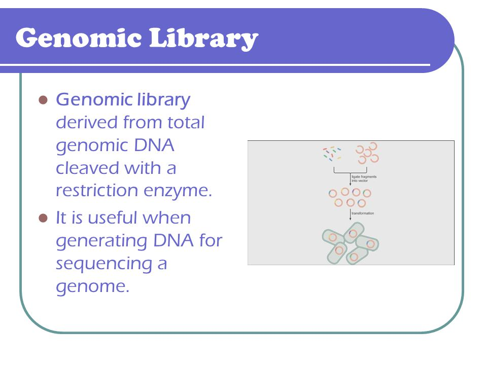 Genomic Library Genomic library derived from total genomic DNA cleaved with a restriction enzyme.