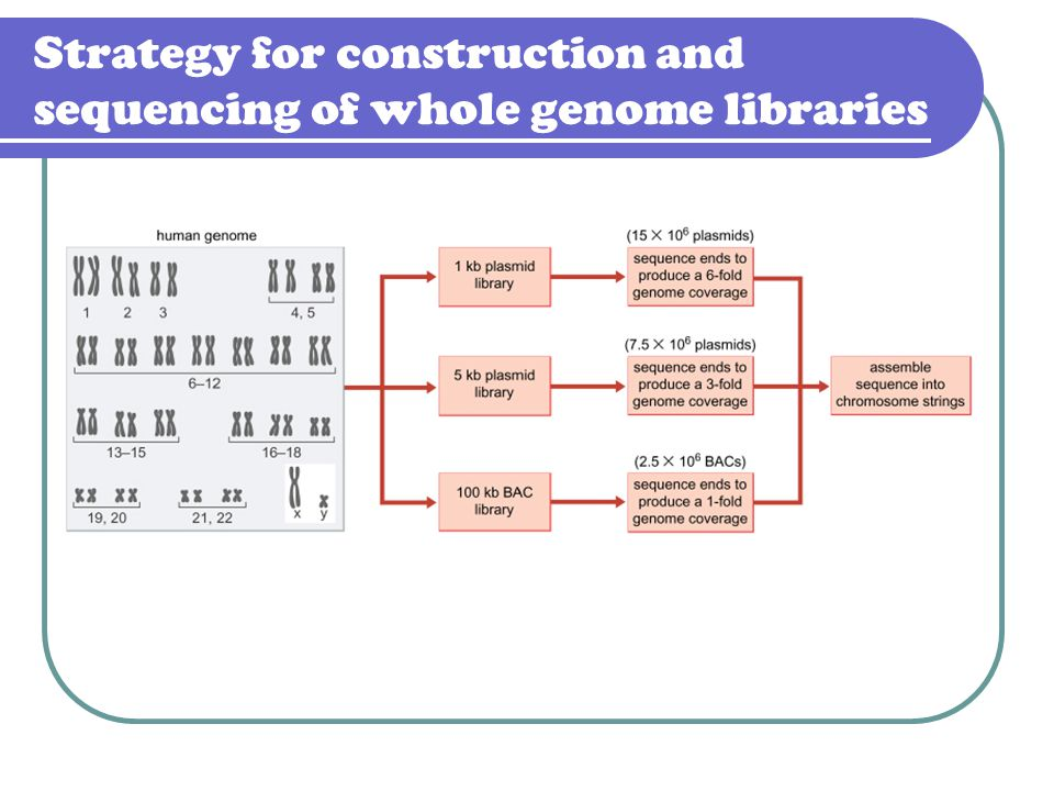 Strategy for construction and sequencing of whole genome libraries