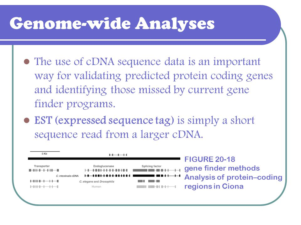 Genome-wide Analyses