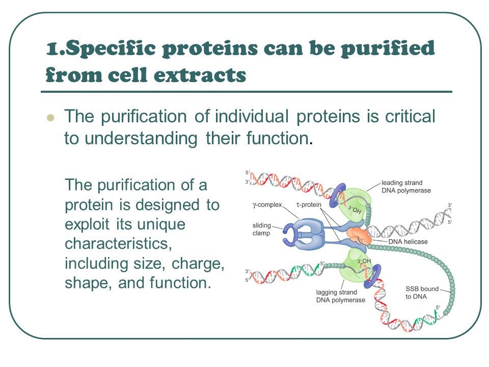 1.Specific proteins can be purified from cell extracts