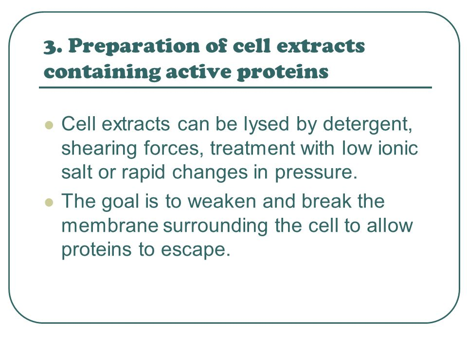 3. Preparation of cell extracts containing active proteins