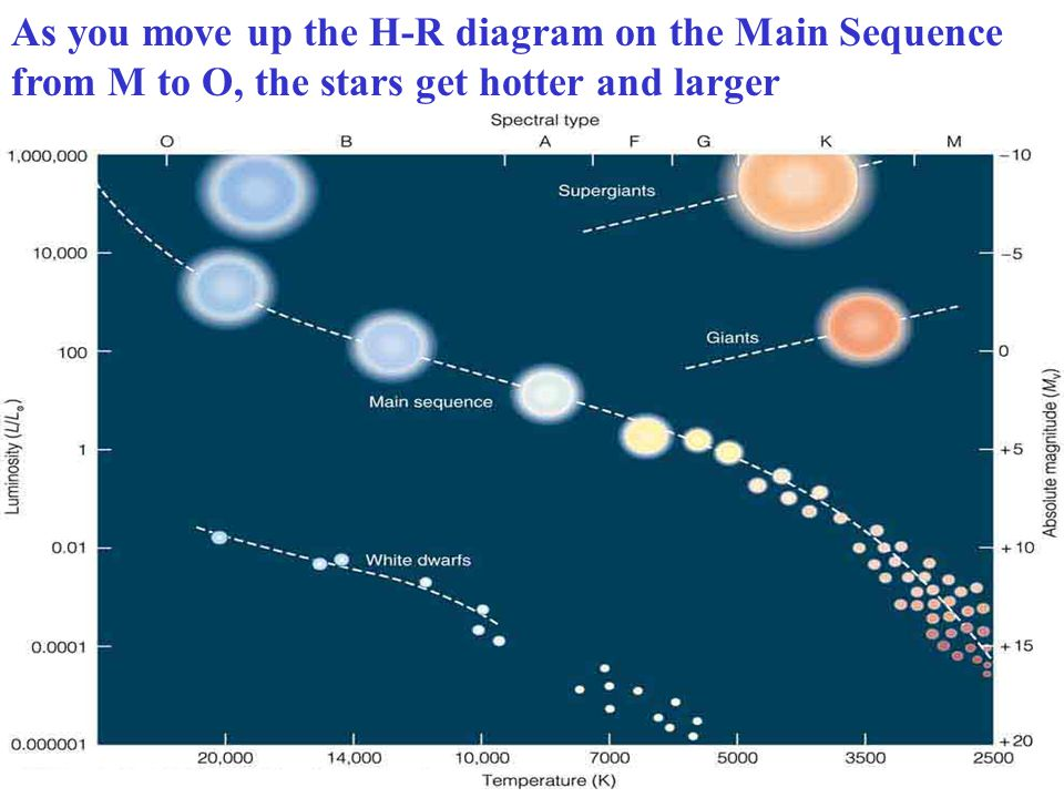 As you move up the H-R diagram on the Main Sequence from M to O, the stars get hotter and larger