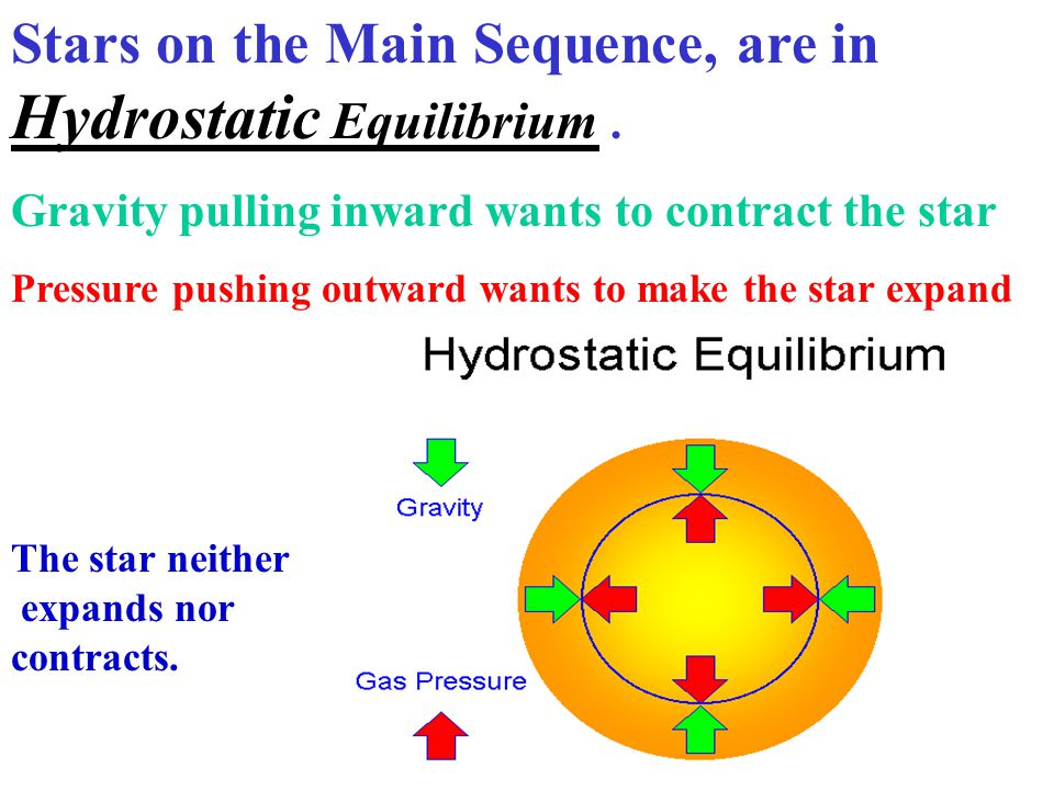 Stars on the Main Sequence, are in Hydrostatic Equilibrium .