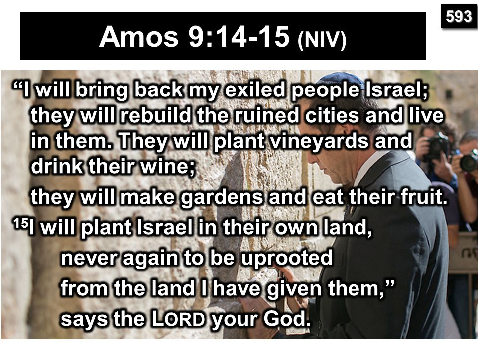 593 Amos 9:14-15 (NIV)