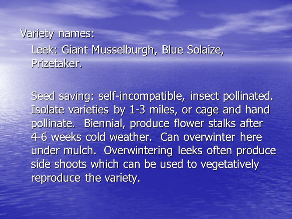 Variety names: Leek: Giant Musselburgh, Blue Solaize, Prizetaker.