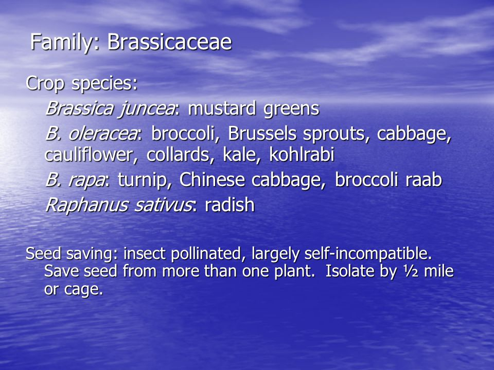 Family: Brassicaceae Crop species: Brassica juncea: mustard greens