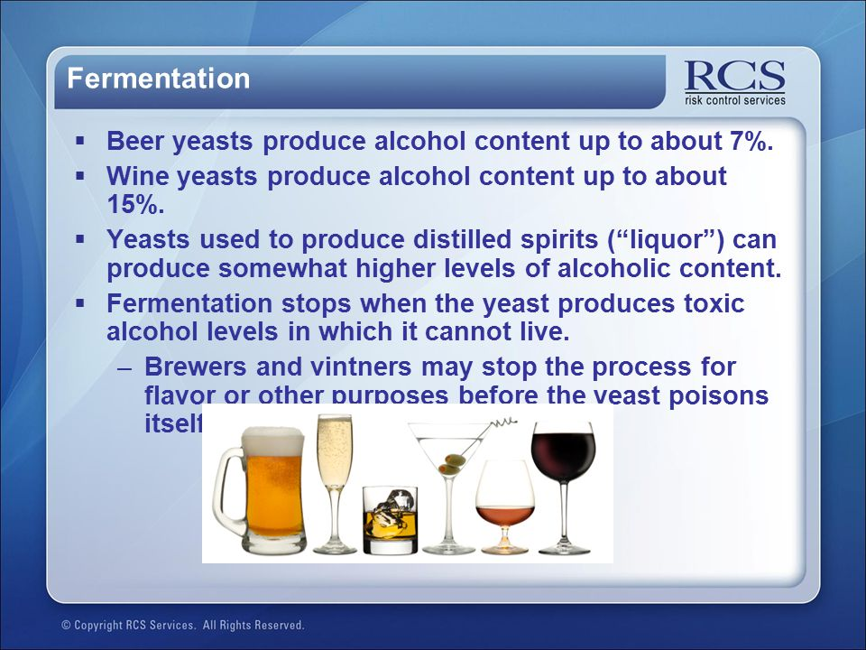 Fermentation Beer yeasts produce alcohol content up to about 7%.
