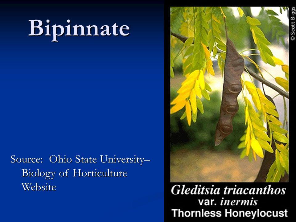 Bipinnate Source: Ohio State University– Biology of Horticulture Website