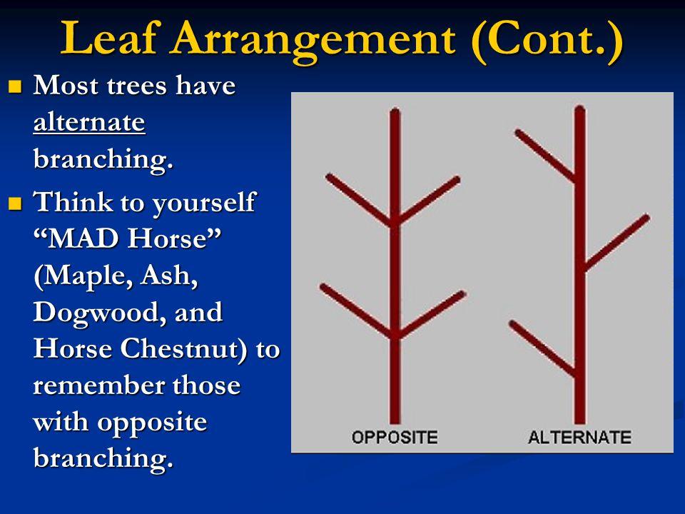 Leaf Arrangement (Cont.)
